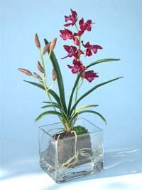 Druhy orchidejí