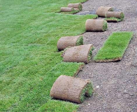 Travní koberec kobylnice