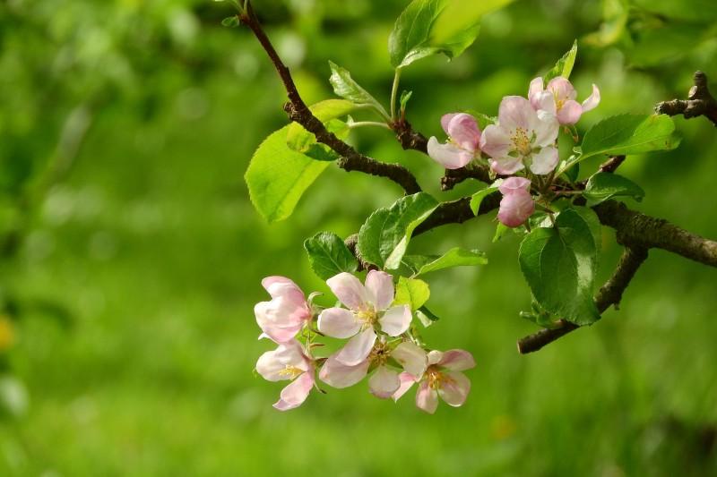 Ventura venkov - jaro na zahradě
